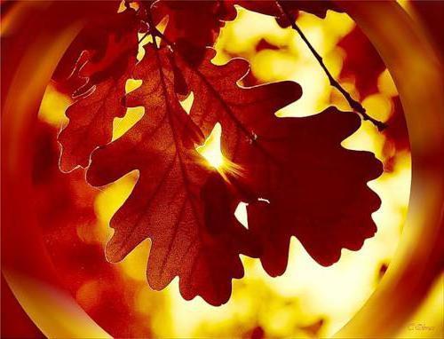 Осенняя фантазия, природа