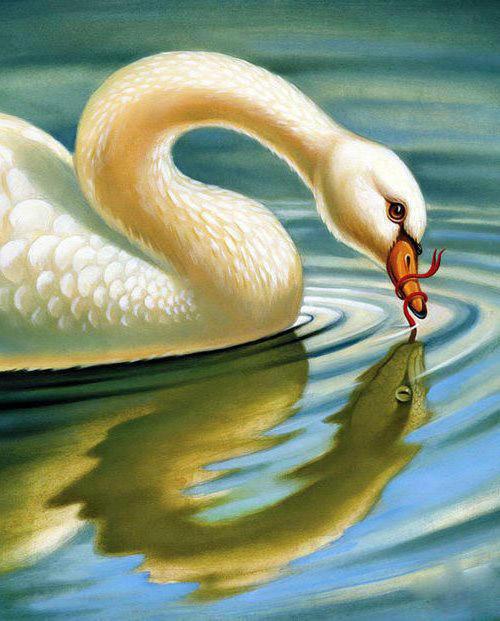 Лебедь и змея, лебедь, птицы