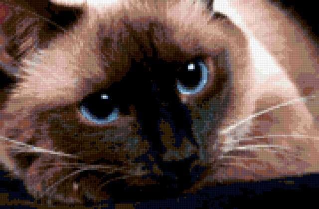 Кошачьи глаза, кошки, глаза