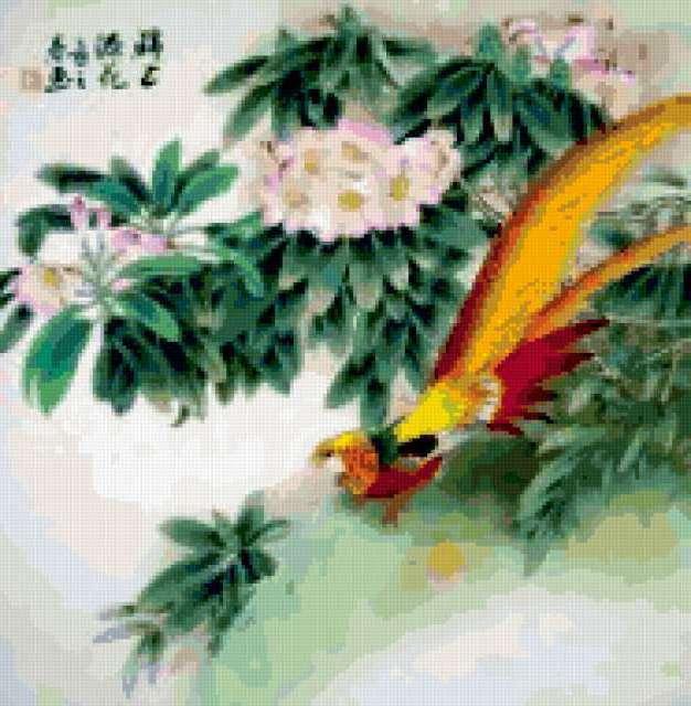 Золотой фазан, предпросмотр