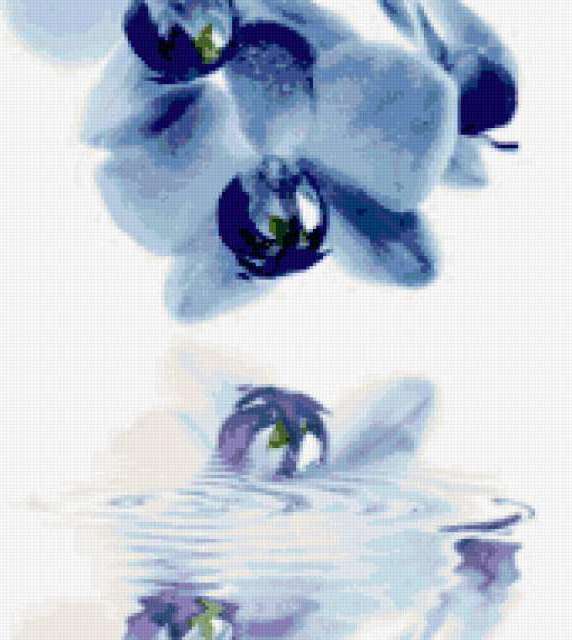 Голубая орхидея, предпросмотр
