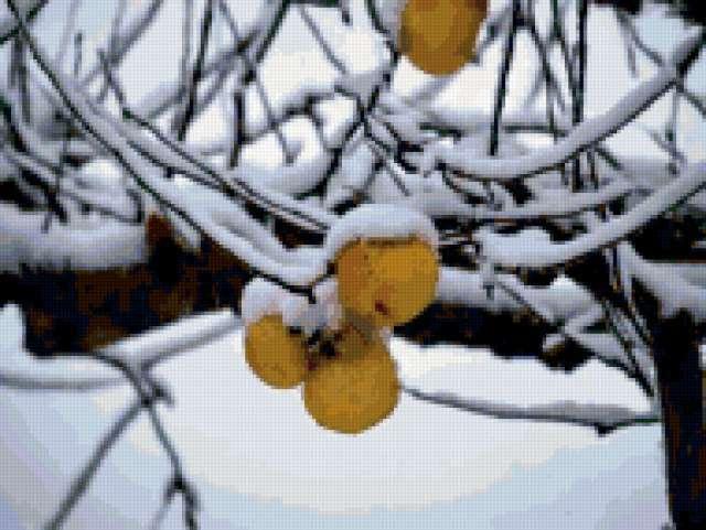 55 зима яблоки снег