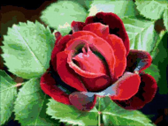 Королева цветов, предпросмотр