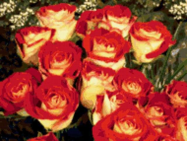 Огненные розы, предпросмотр
