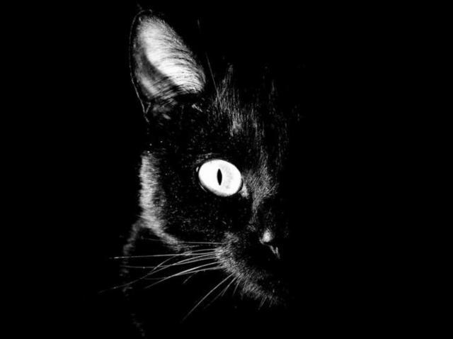 Черная кошка, черно-белое,