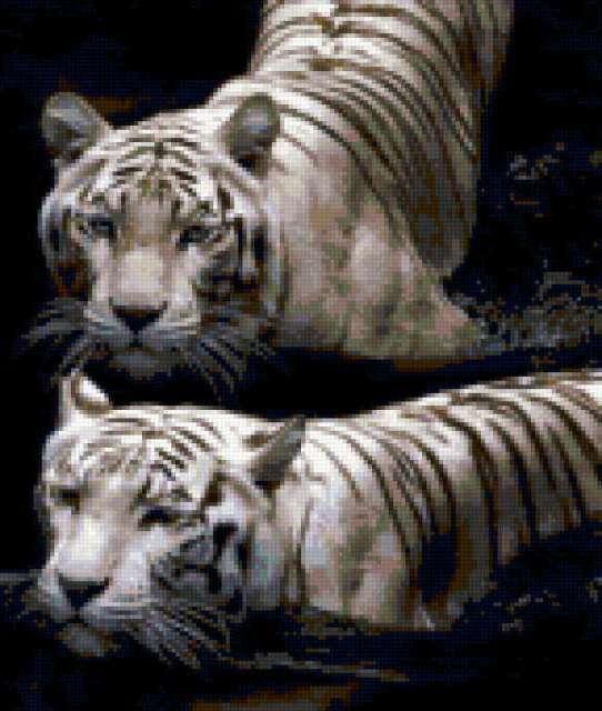 Тигриная любовь, тигры, семья