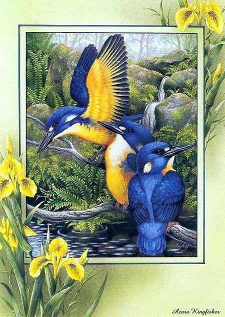 Птицы и ирисы, птицы, природа,