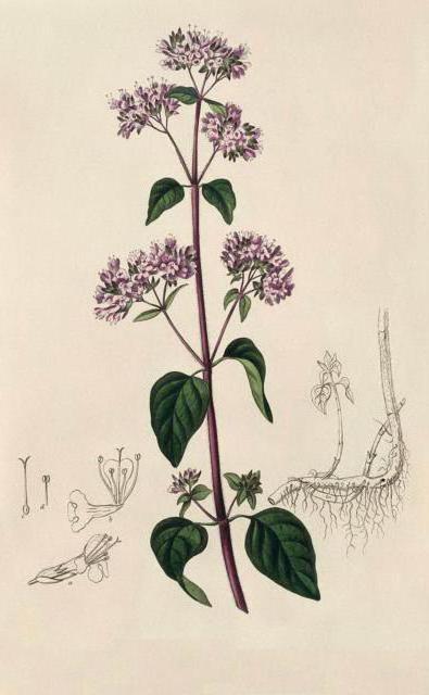 Вышивка крестом схемы гербарии