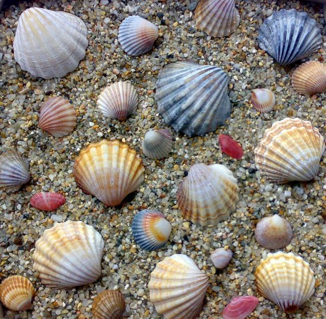 Ракушки, море, песок, ракушки