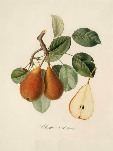 Серия ботаника-груша, растения