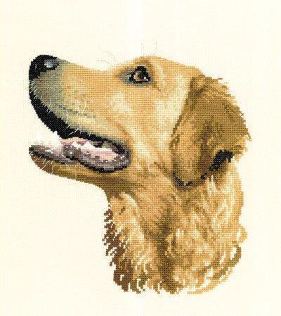 Лабрадор, лабрадор, собака