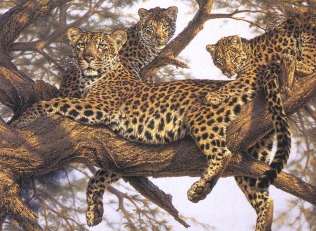 Вышивка крестиком леопарды