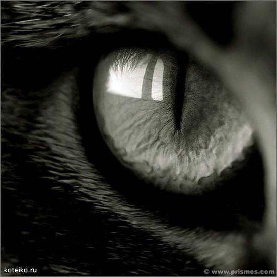 Кошачий глаз, глаз, кошка,