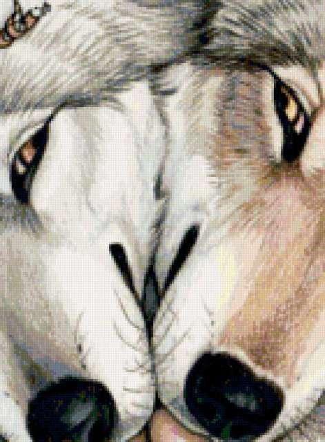 Волчья любовь, волк, волчица