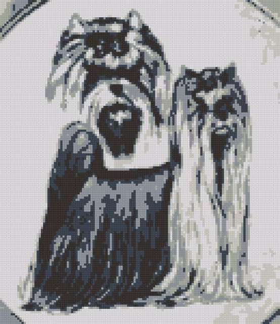Йоркширский терьер, животные