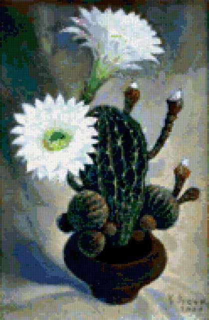 Цветущий кактус, кактусы