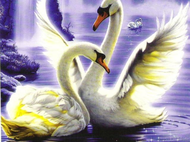 Лебединая верность..., птицы