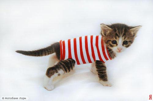 Котенок в тельняшке, котенок,