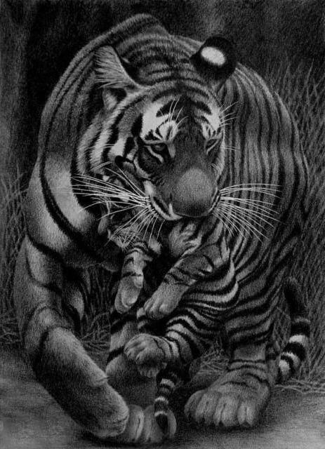 Тигрица и тигрёнок, оригинал