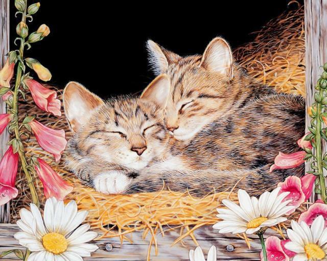 Сладкие сны, животное, котята