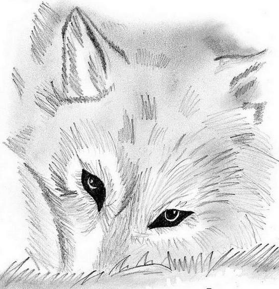 Волк, монохром, животные