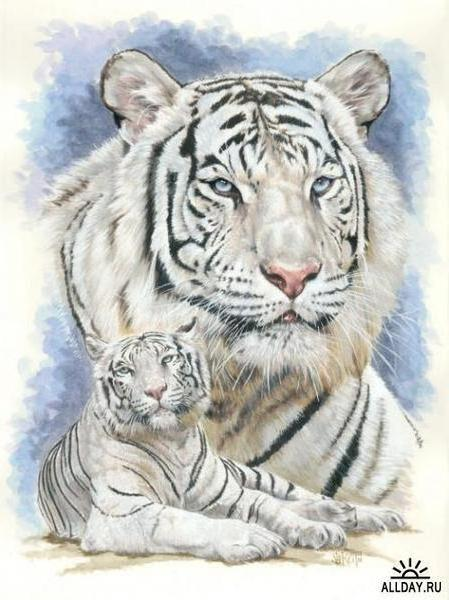Белый тигр, животные, кошки,