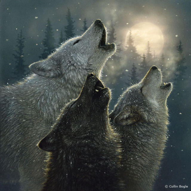 Полнолуние, волк, волчица