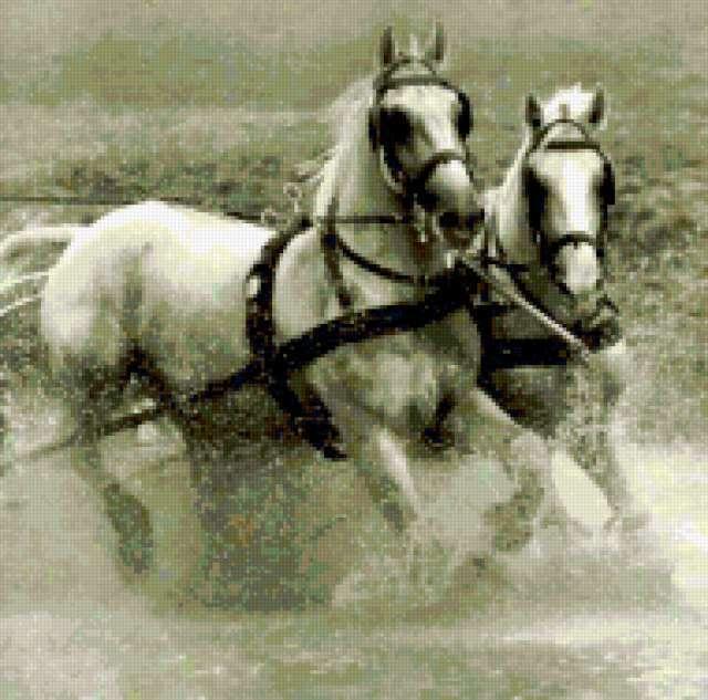 Бегущие лошади, лошади, кони,