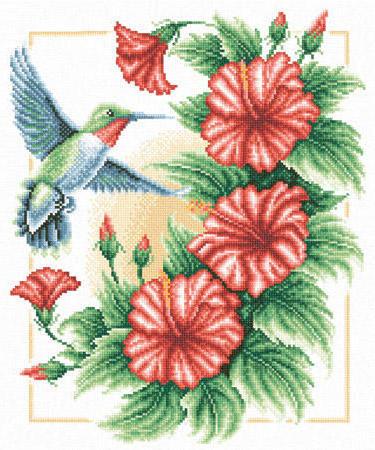 Колибри и вьюнок, цветы, птицы