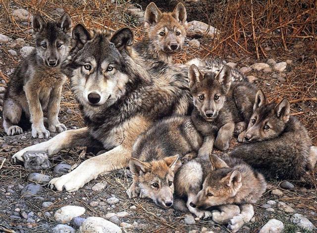 Волчица и волчата , оригинал