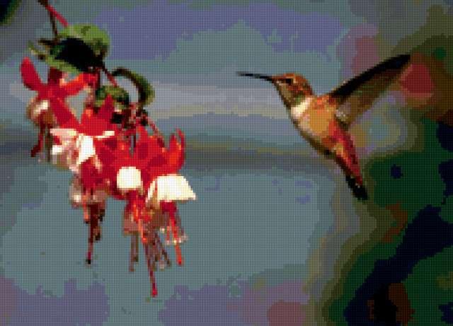 Колибри и фуксия, предпросмотр