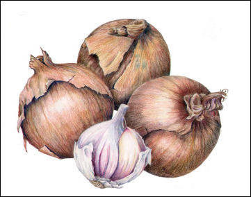 Onion and Garlic,