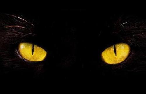 Кошачьи глаза, кошки