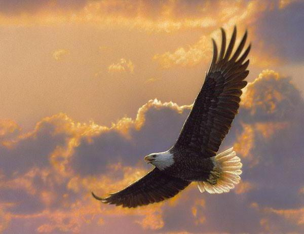 парящий орёл фото