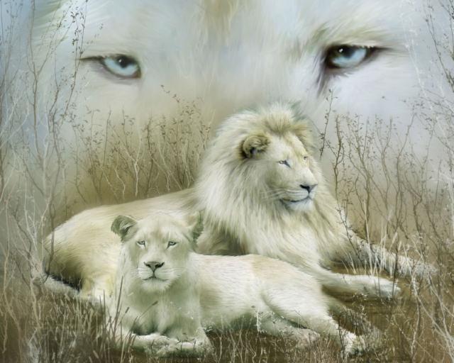 Белый лев и львица, оригинал