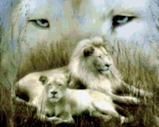 Белый лев и львица,