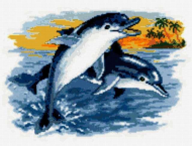 Два веселых дельфинчика