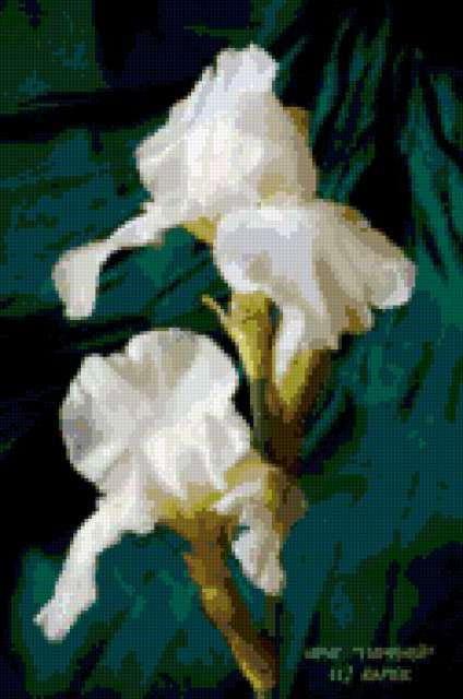 Белые ирисы, предпросмотр