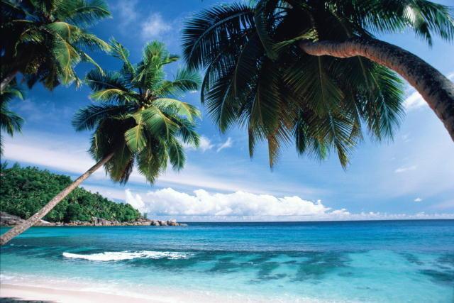 Пальмы , природа, море, берег,