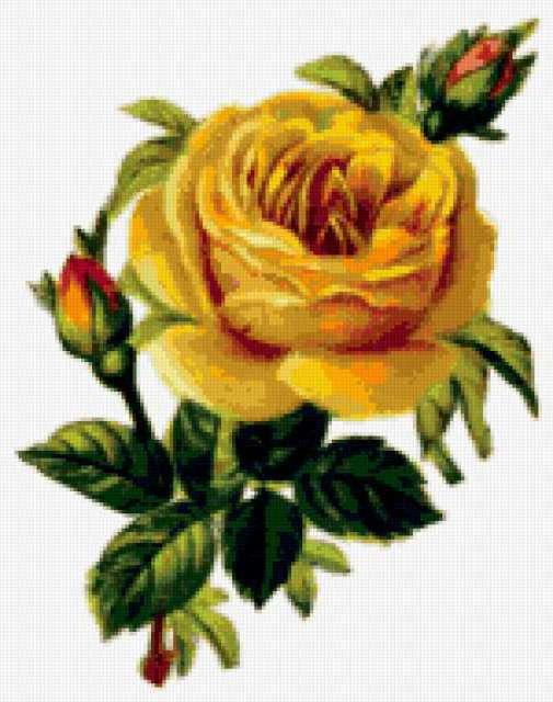 К схеме вышивки «Желтые розы»