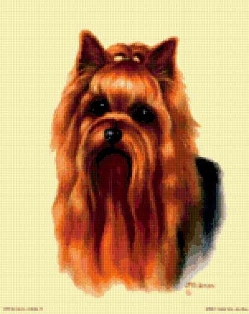 Йоркширский терьер, собаки
