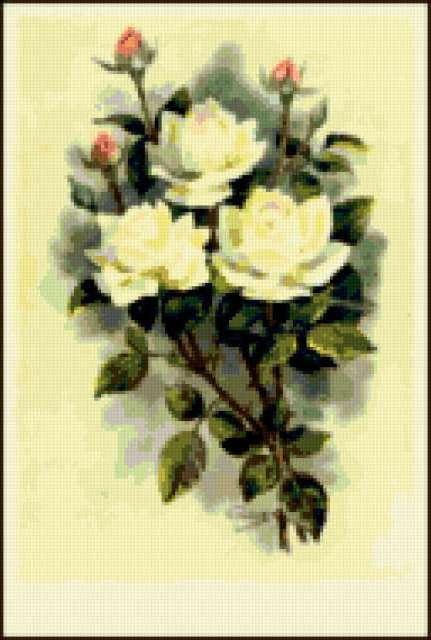 Букет белых роз, предпросмотр