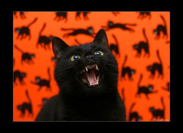 Кот хэллоуин, хэллоуин