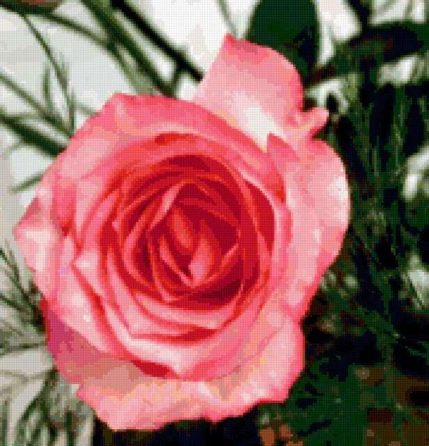Подушка Розовая роза