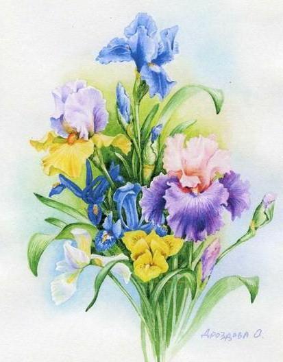 Ирисы в букете, цветы .букет