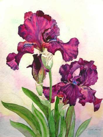 Ирисы, цветок, цветы, ирис,