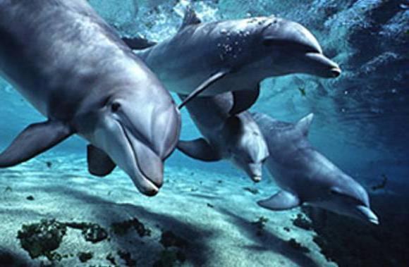 Дельфины, дельфины, море