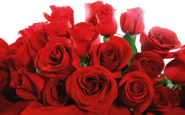 букет алых роз: