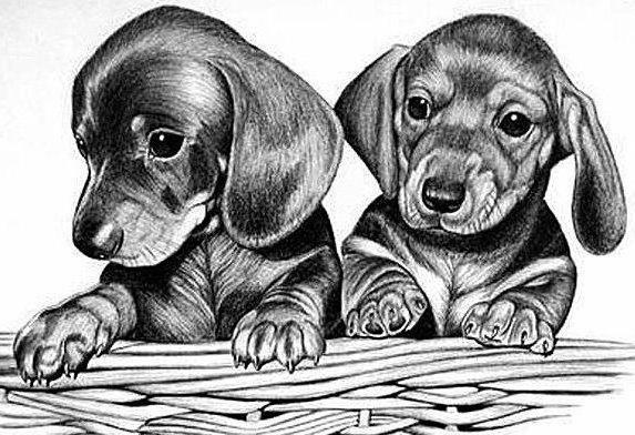 Щенки, щенки, собака, собаки,