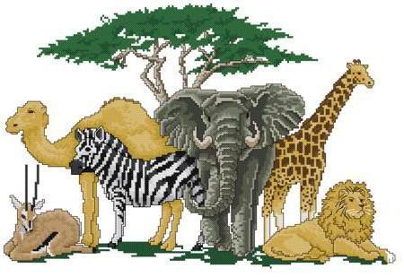 зебра, жираф, верблюд